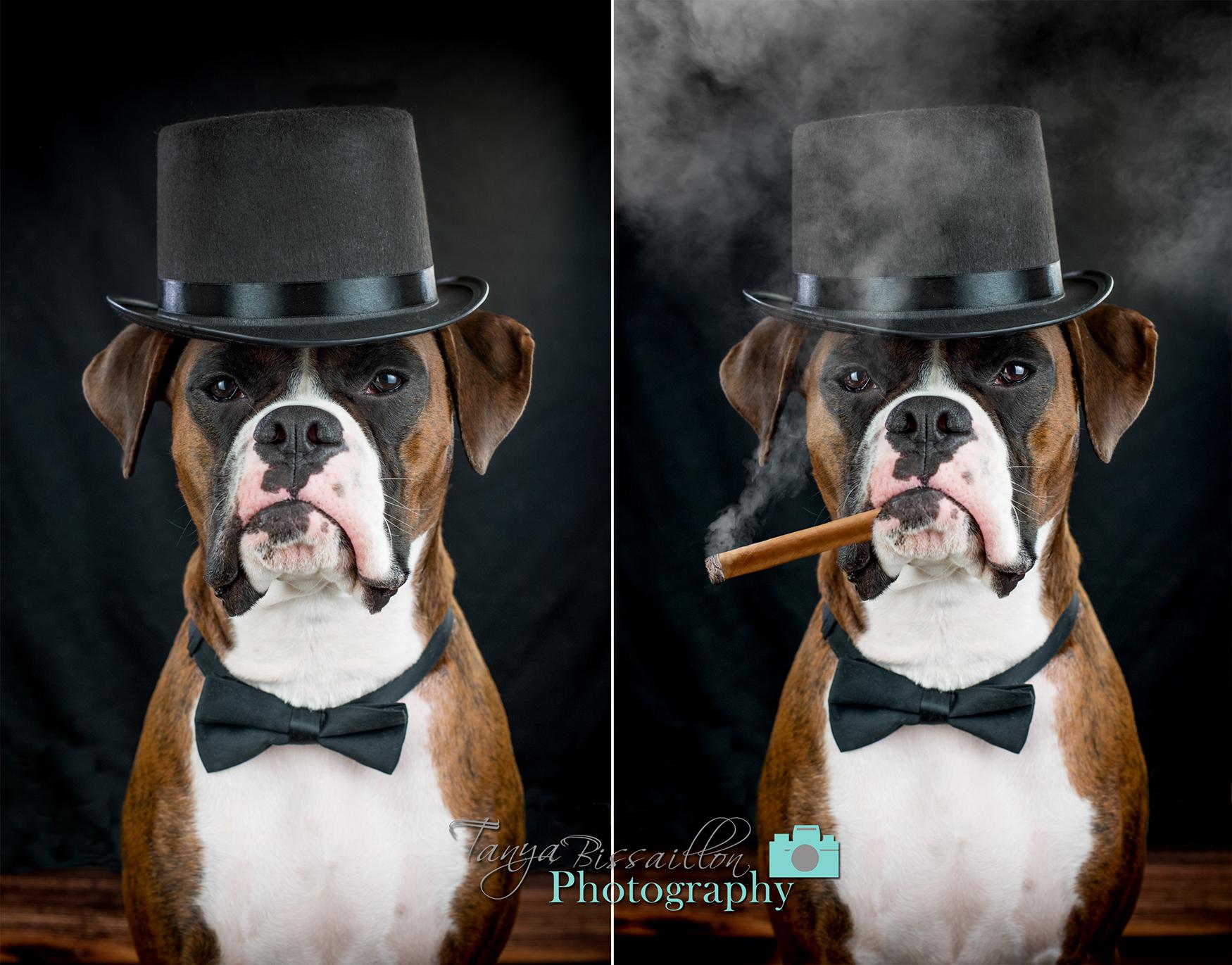 Dog in hat smoking cigar