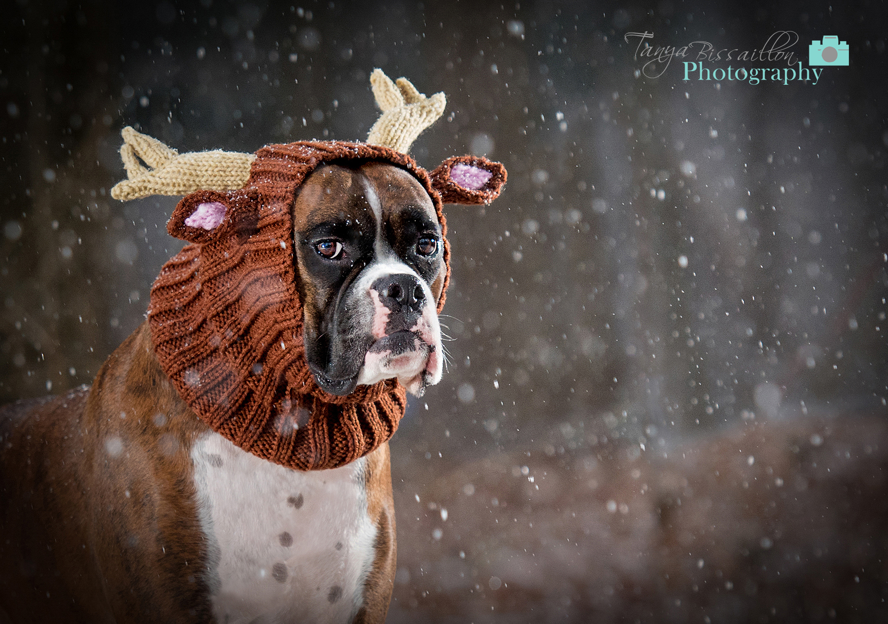 dog in snow wearing a reindeer hat