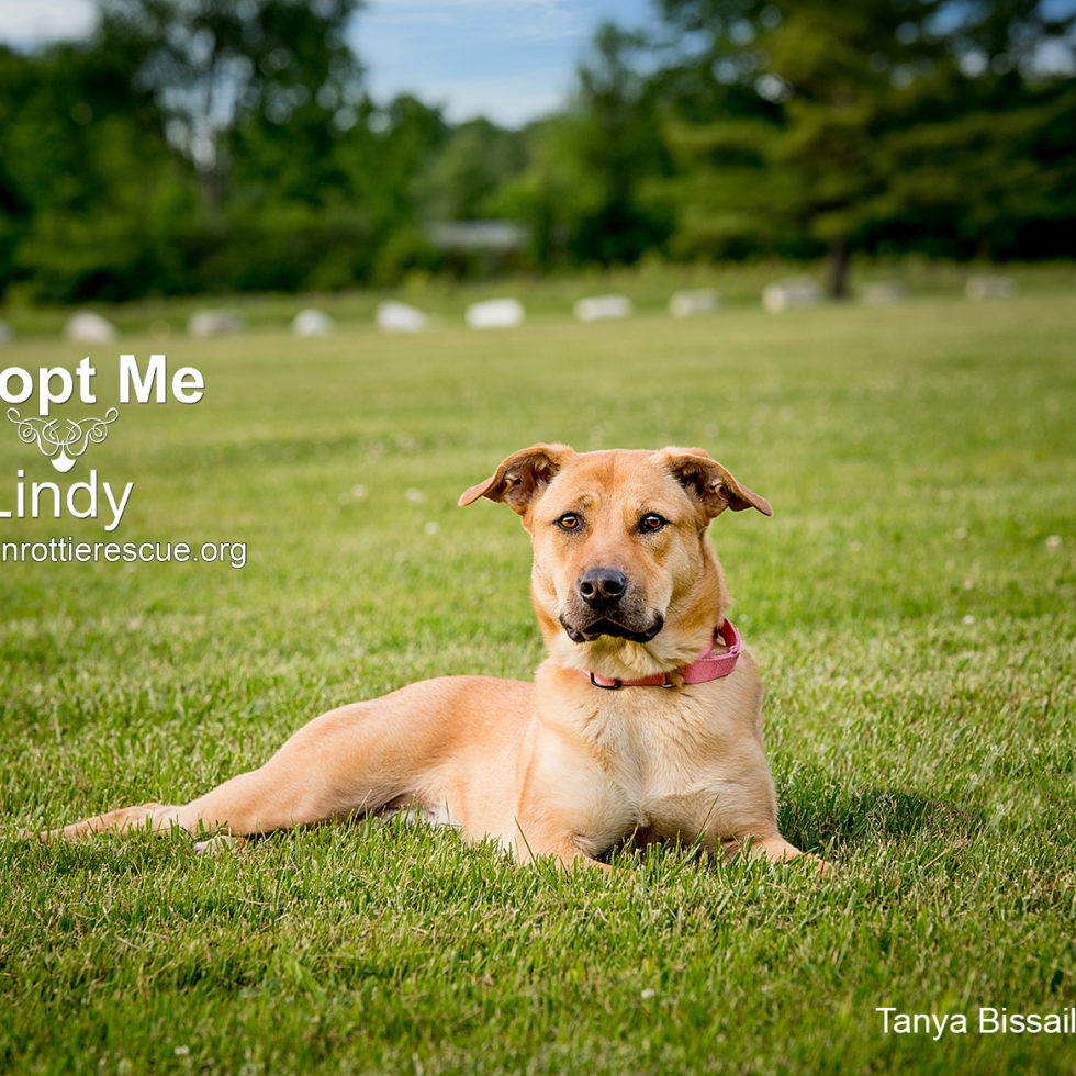 Outdoor pet photography by Tanya Bissaillon